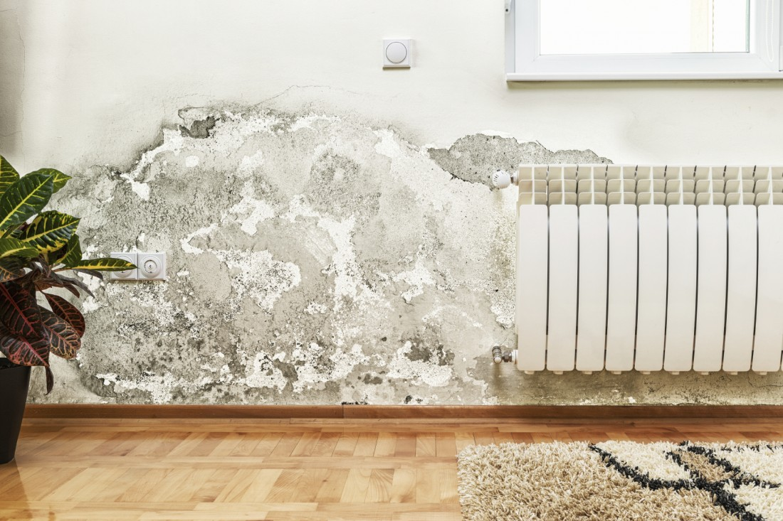 Finding The Right Mold Removal Company To Hire